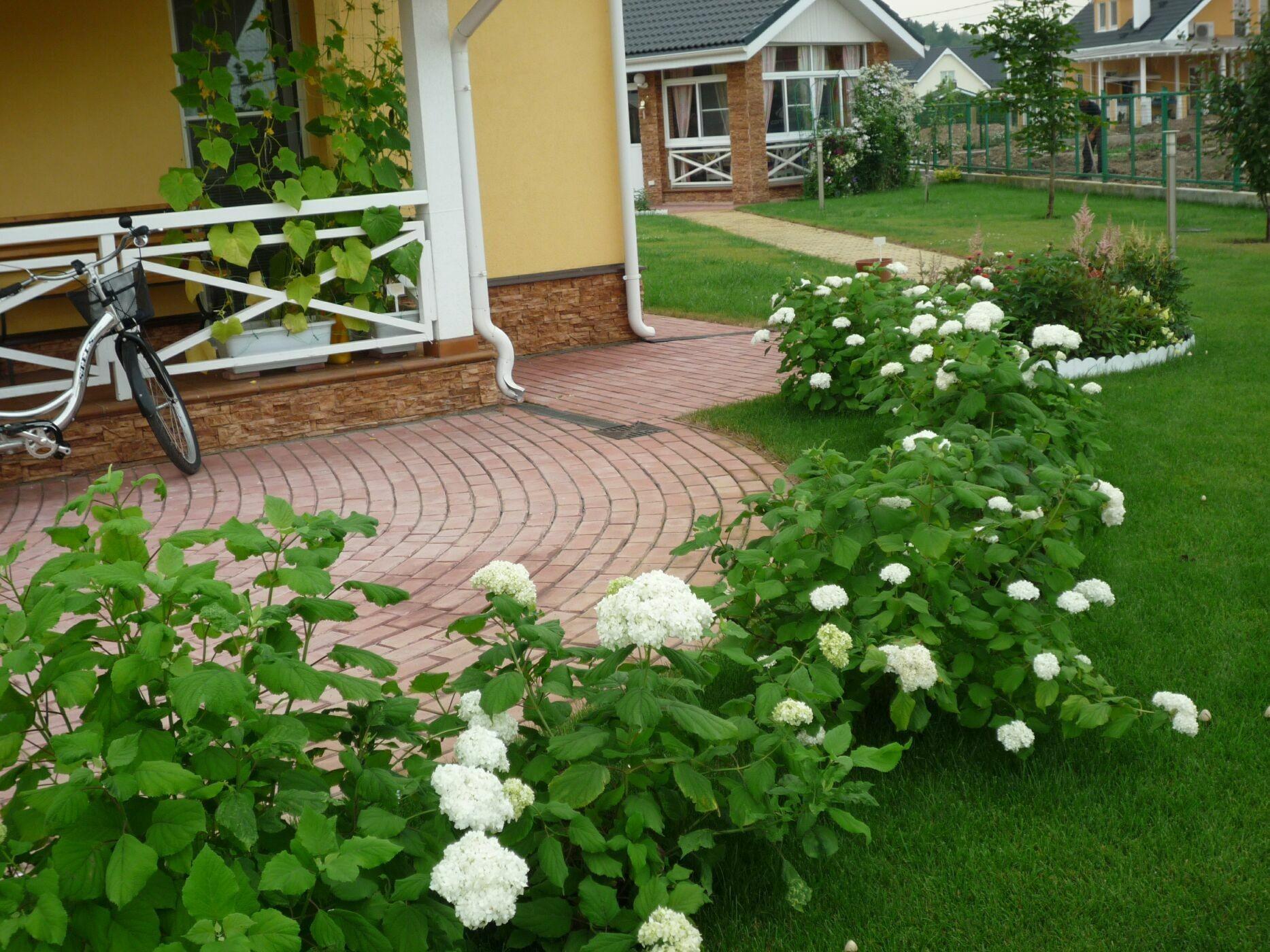 Совместимость овощей в теплице Сайт о саде, даче и комнатных растениях 76