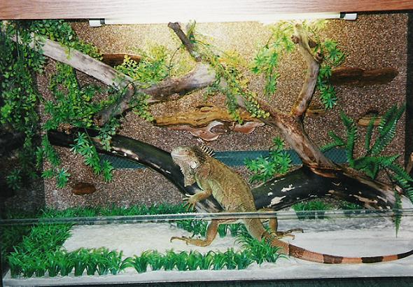 Террариумы для ящериц