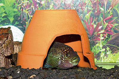 Декор в аквариум своими руками - Самодельные