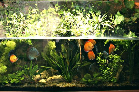 нужно ли выключать воздух в аквариуме лучших медицинских
