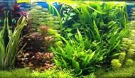 Клеим аквариум сами