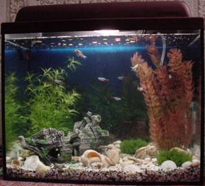 аквариум для водных улиток знают все понимают