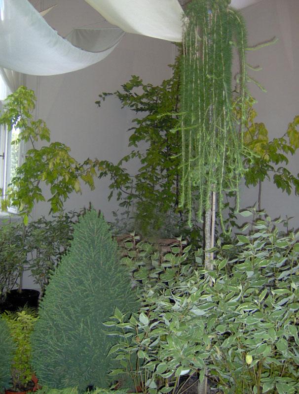 Использовать ядовитые растения