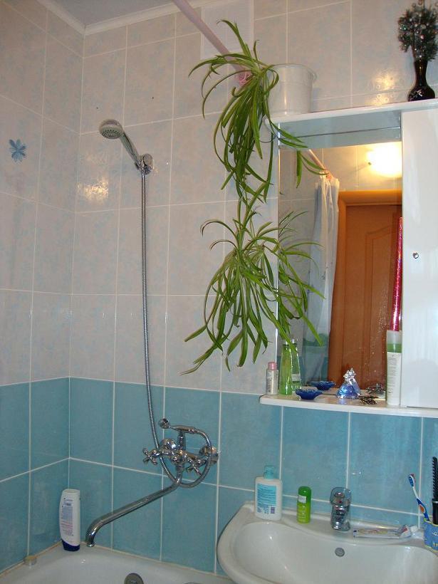 Ванна маленькая или большая ванна