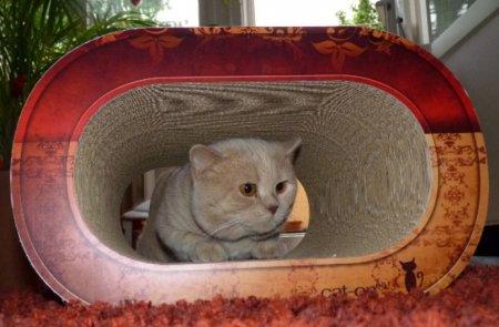Кошачий уголок в современном интерьере