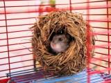 Животные дома