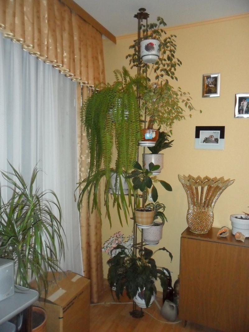 Цветы в гостиной