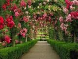 Розарий как элемент ландшафтного дизайна