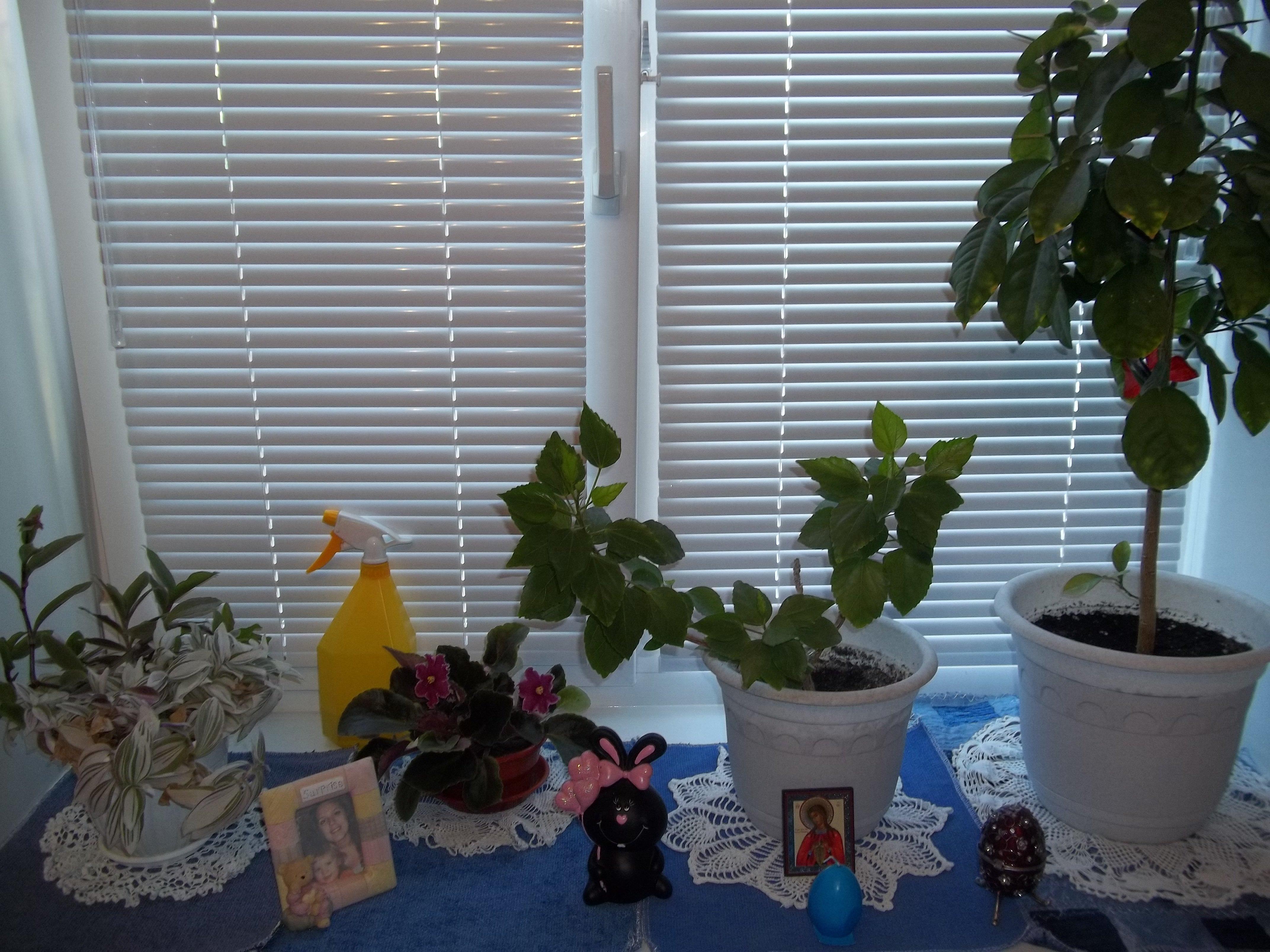 Комнатные цветы на солнечной стороне фото